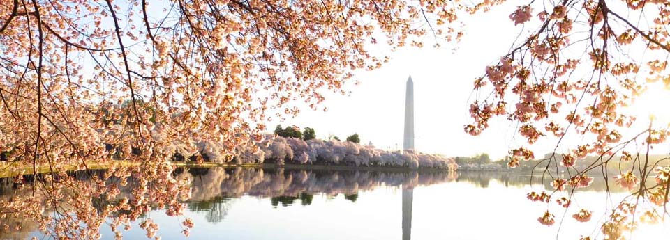 Visitar Washington desde Nueva York en un día